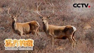 《远方的家》 20190805 系列节目《大好河山》——秘境之踪 青藏高原| CCTV中文国际