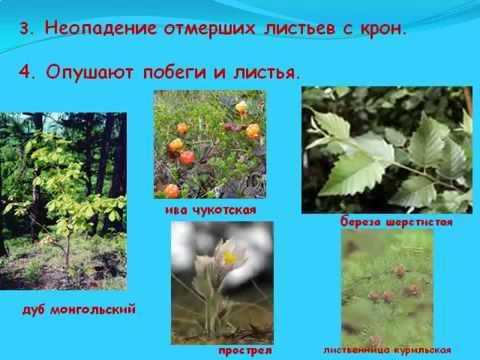 Конспект урока биологии, 5 класс Экологические факторы среды