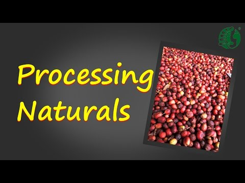 Coffee Processing Methods (Naturals)