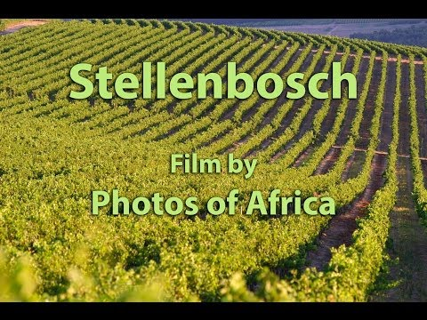 Stellenbosch SD - South Africa Travel Cahnnel 24