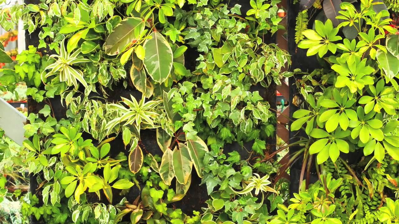 Vertical Garden Solutions Video #1