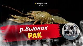 Русская рыбалка 4 Фарм серебра Рак р Вьюнок рр4 добыча наживки троф рак вьюнок