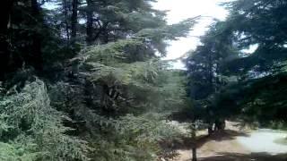 ثلاث دقائق رائعة في غابات الشريعة في الجزائر
