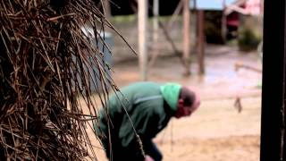 Shocking bull attack video