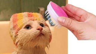 10 полезных товаров для котов с Алиэкспресса / Самые лучшие вещи с Алиэкспресса(Полезные вещи для котов с Алиэкспресса. Я думаю ваш кот не знает про Алиэкспресс, но я думаю он будет очень..., 2016-11-25T14:00:04.000Z)