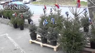 Купи жива елха - помогни на дете с аутизъм