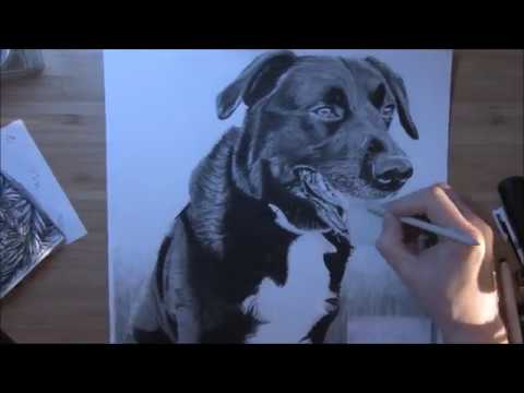 drawing-a-black-dog-in-pencil
