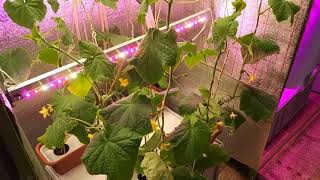 Искусственное освещение растений. Измерение параметров светильников Artificial lighting of plants. M