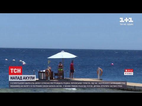 У Шарм-ель-Шейху акула атакувала українських туристів