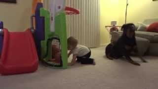 Rottweiler And Baby Play With Ball