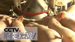 《我爱发明》 20190503 劳动智慧星 3| CCTV科教