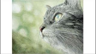 【色鉛筆】ネコを描いてみた背景をパステルで How to draw a cat