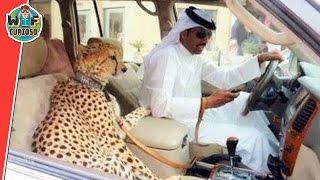Cosas Que Solo Veras En Dubai