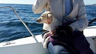 Puppy Rescued In Middle Of The Sea