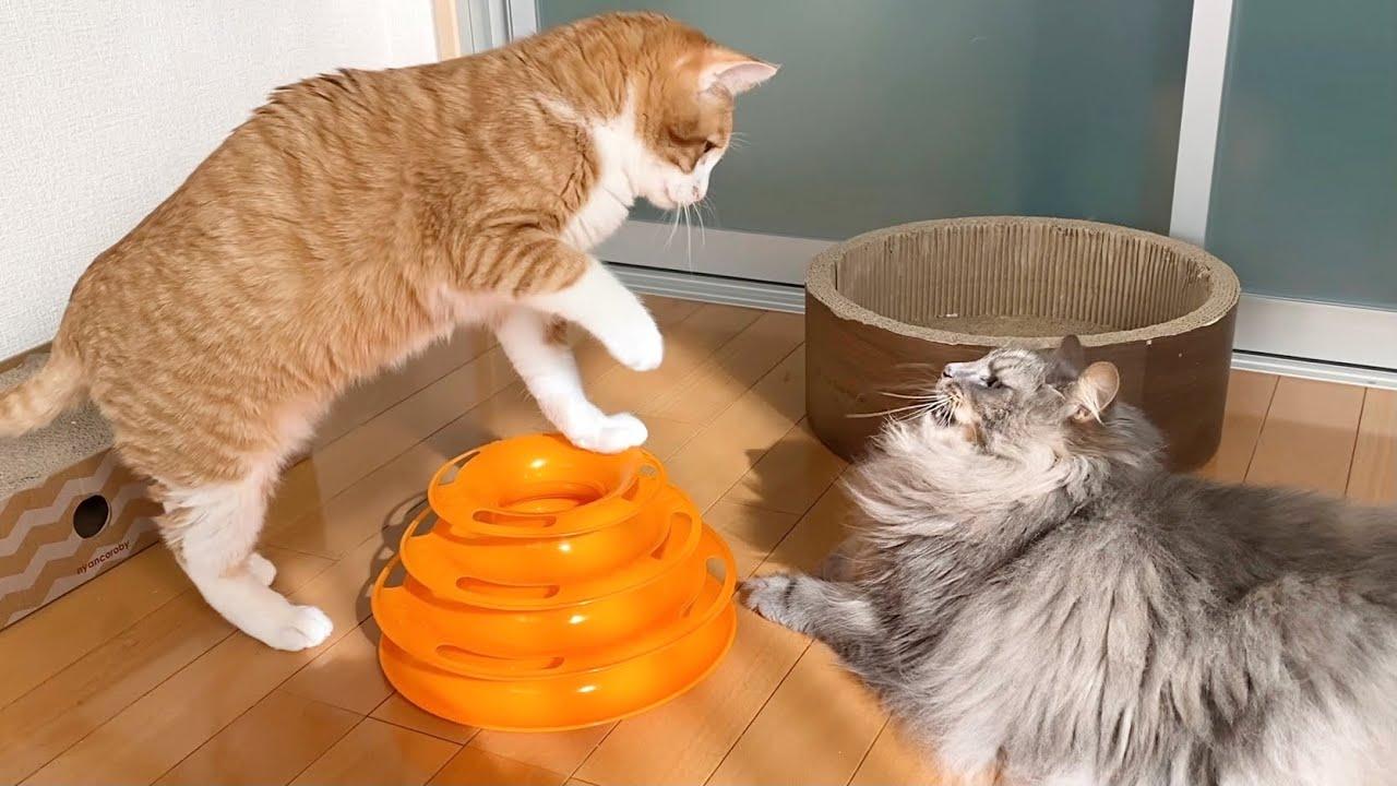 珍しく姉猫と遊ぶ双子猫がこちら
