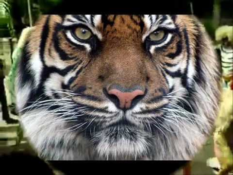 tiger dance song _ maunath _bhanjan_u.p.