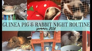 guinea pig rabbit summer night routine 2018 imysanimals