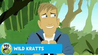 Wild Kratts: Jungle Adventure thumbnail