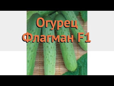 Огурец обыкновенный Флагман F1 (flagman f1) 🌿 Флагман F1 обзор: как сажать, семена огурца Флагман F1