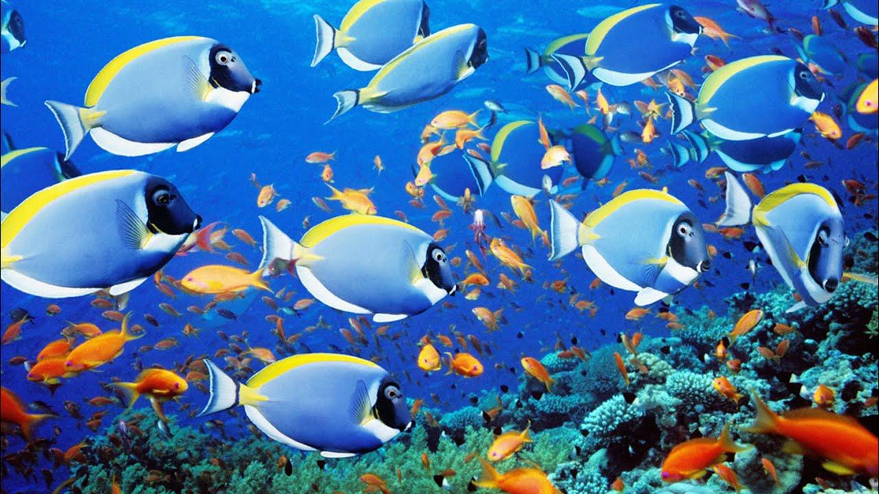 Подводная охота #20 индийский океан