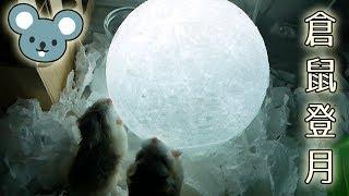小雲小吉中秋「嘗」月 :3 Hamster Eat The Moon! 中秋節快樂!