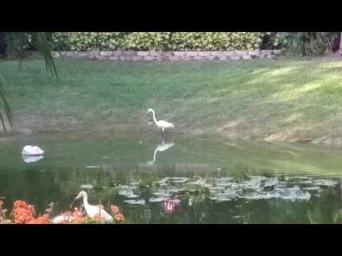 Bird At Our Pond