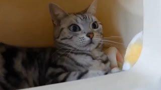 大人の事情で…突然トイレ化した猫ベッドに戸惑いを隠せない猫www -Cat bed becomes a Cat litter! thumbnail