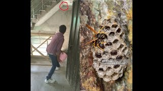 3 methods to destroy wasp nest in just 1 minute