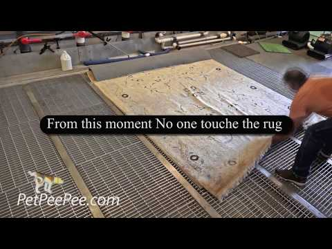 smart way to clean Oriental rug from Dirt soil and pet pee pee