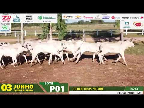 LOTE P01