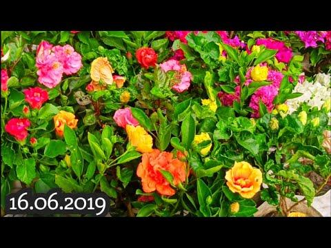 Kolkata Flower Market At Galiff Street Visit 16th June 2019 The Cheapest Flower Market In India