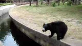 Dancing Bear - Funny Video