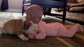 Bulldog Puppy Kissing The Baby
