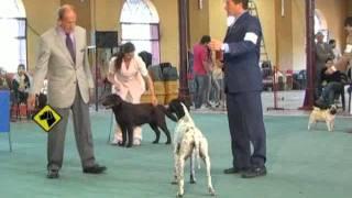 """""""perros En Acción"""" Santa Fe Kennel Club"""