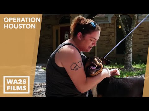 This Woman Couldn't Get Her Dogs Back From Houston SPCA After Hurricane - Hope For Dogs | My DoDo