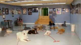 Man's Best Friend Dog Training Provides World Class Dog Training