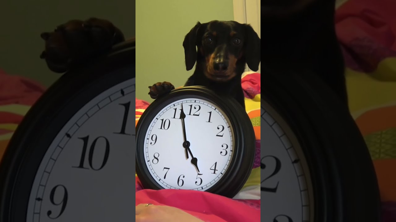 Download It's always 5:00 somewhere for a #dachshund!