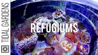 Refugiums For The Reef Aquarium