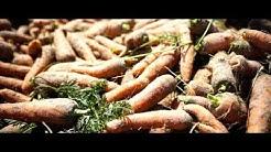 La carotte de la baie du Mont Saint Michel