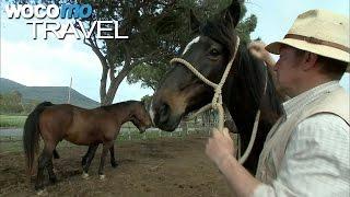 Die letzten Cowboys der Toskana (360° - GEO Reportage)