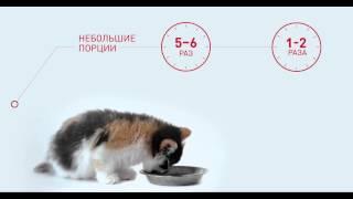 """Сомнение №2 """"Как правильно кормить котенка?"""""""