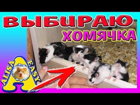 ПОКУПАЮ ХОМЯКА в ПИТОМНИКЕ / СОВЕТЫ ЗАВОДЧИКА ЧЕМ КОРМИТЬ ДЖУНГАРСКОГО ХОМЯКА / Alisa Easy Pets