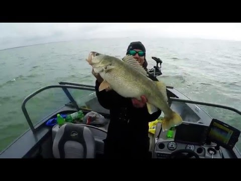 HUGE Walleye 14.8lbs caught on Lake Erie trolling. Fishing Spring Walleye 2016