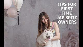 Diary 47: What first time japanese spitz owners should know! |Personality, tear stains etc