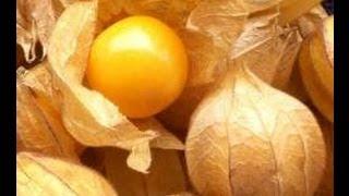 Aguayamiento, una Fruta Milagrosa con Múltiples Propiedades y Beneficios para la Salud.