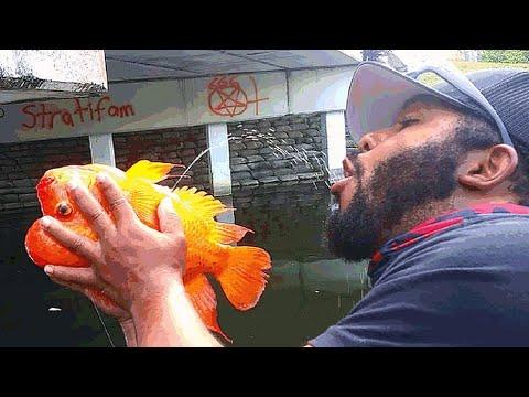 Fisherman DRINKS GOLDFISH PEE For SURVIVAL!?