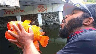 Fisherman DRINKS GOLDFISH PEE for SURVIVAL!?