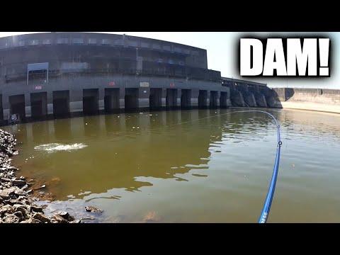 Crankbait Fishing Below The Dam - Surprising Fish Catch! (Realistic)