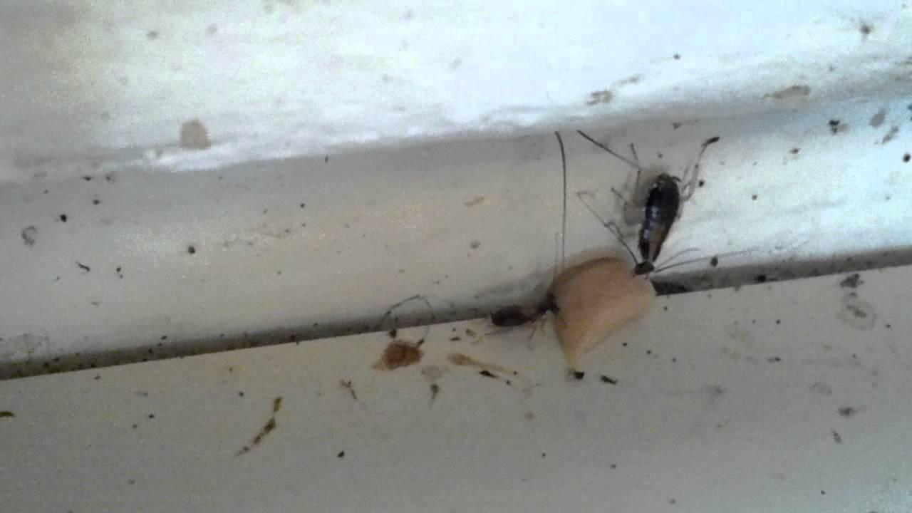 Advion Roach Bait