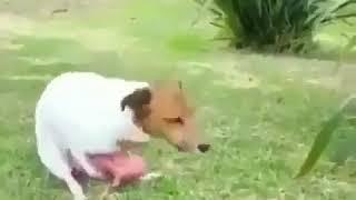 Dogo porn